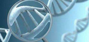 单基因遗传病中变异的效应与疾病的机制